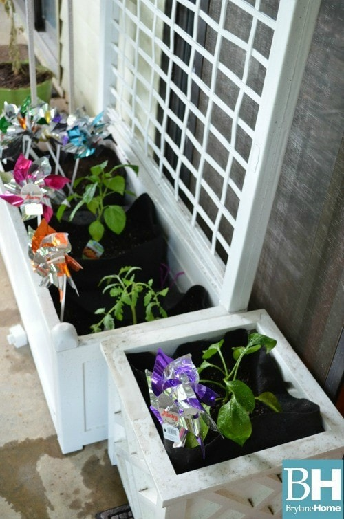 Choosing Garden Containers for your Balcony Garden