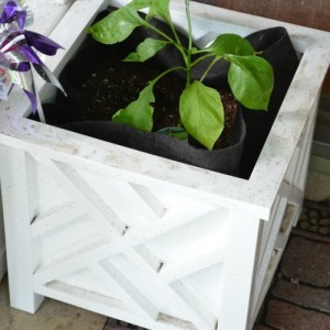 How To Choose the Right Garden Containers for your Balcony Garden