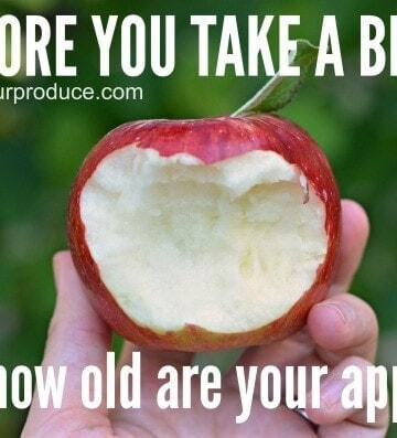 How fresh are your apples? They could be over a year old.