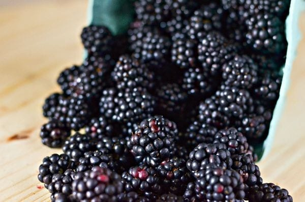 farm fresh picked blackberries